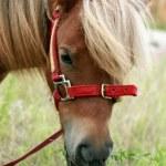������, ������: Pony