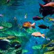 Stock Photo: colorful tropical fish