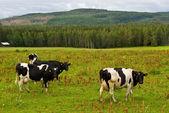 农村瑞典 — 图库照片