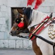 Traditional polish horses — Stock Photo