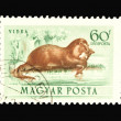 Post stamp — Foto de stock #3026256