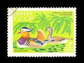 切手切手 — ストック写真