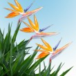 Bird of paradise border tropical - Stock Photo