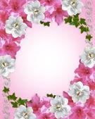 Floral border azaleas and magnolia — Stock Photo