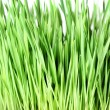 Grass isolated - Foto de Stock  
