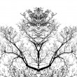 Tree branches - Stockfoto