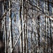 Woods abstract — Stockfoto
