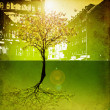 Stock Photo: Last tree in city