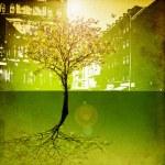 Last tree in city — Stock Photo