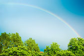 Rainbow over the trees — Stock Photo