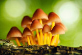 Growing mashrooms in the forest — Stock Photo