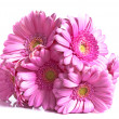 Pink gerber flower -  