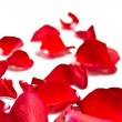Romantic red rose petals on white with copy space — Stock fotografie