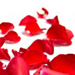 Romantic red rose petals on white with copy space — Stock Photo