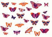 Set of different butterflies — Stock Photo