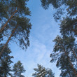 Tops of trees against the sky — Stock Photo