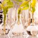 Green Seedling laboratory — Stock Photo #3227675