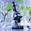 Green Seedling and microscope in laboratory — Stock Photo #3228845