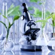 Green Seedling and microscope in laboratory — Stok fotoğraf