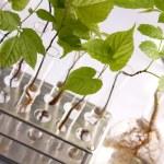 Green Seedling laboratory — Stock Photo #3228846