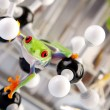 Green frog in laboratory — Stock Photo #3228906