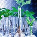Green Seedling laboratory — Stock Photo