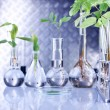 Stock Photo: Green Seedling laboratory
