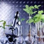 Green Seedling laboratory — Stock Photo #3228947