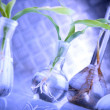 Super laboratory with green seedlings — Stock Photo