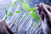 Green Seedling laboratory — Stock Photo