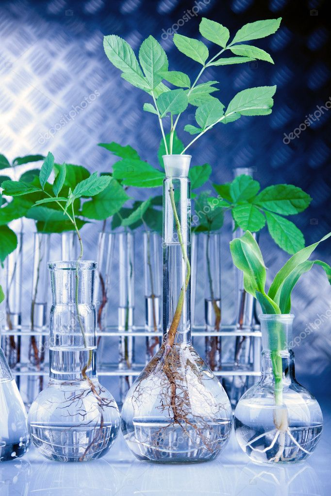 Seedling Laboratory in Blue, young seedlings and lab glassware — Stock Photo #3228921