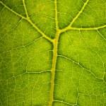 Green leaf structire — Stock Photo