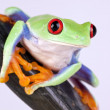 Green frog and rock on white — Stock Photo