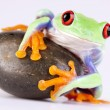 Green frog and rock on white - Stock Photo