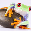 Stock Photo: Green frog and rock on white