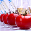 Geneticly Modified food — Stock Photo