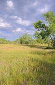 垂直方向の荒野の風景 — ストック写真