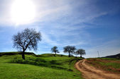 Rural Landscape road and tree — Stock Photo