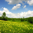Stock Photo: Green field with yellow and white clouds