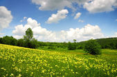 Green field with yellow and white clouds — Stock Photo