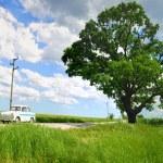 Tree and car — Stock Photo