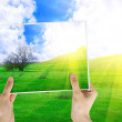 Photo of green grass and tree — Stock Photo