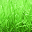 Rich Grass — Stock Photo
