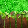 Wooden brown picket fence — Stock Photo