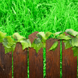 Wooden brown picket fence — Stock Photo #2749798