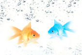 Gold and blue fishes — Stock Photo