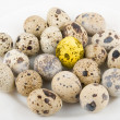 Gold quail egg - Stock Photo