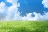 Green grassland — Stock Photo