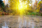 Bog at autumn sunlight forest — Stock Photo