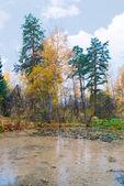 Bog at autumn forest landscape — Stock Photo